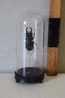 Flask with beetle